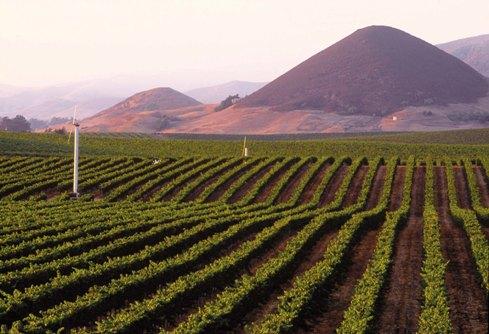 California Pinot Noir Prospectus