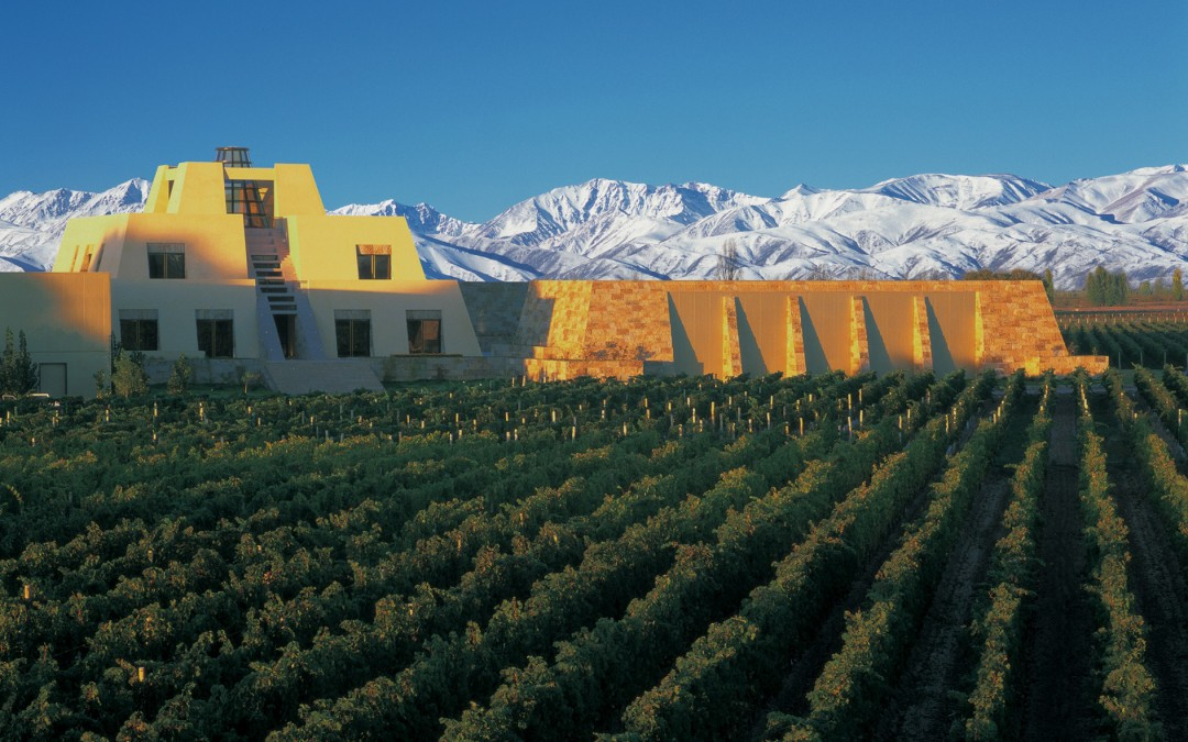 Tilia for Wine Value