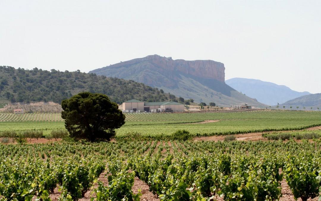 Spanish Wine Values