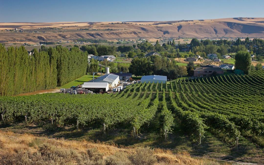 Celebrating an Organic Wine Farming Icon