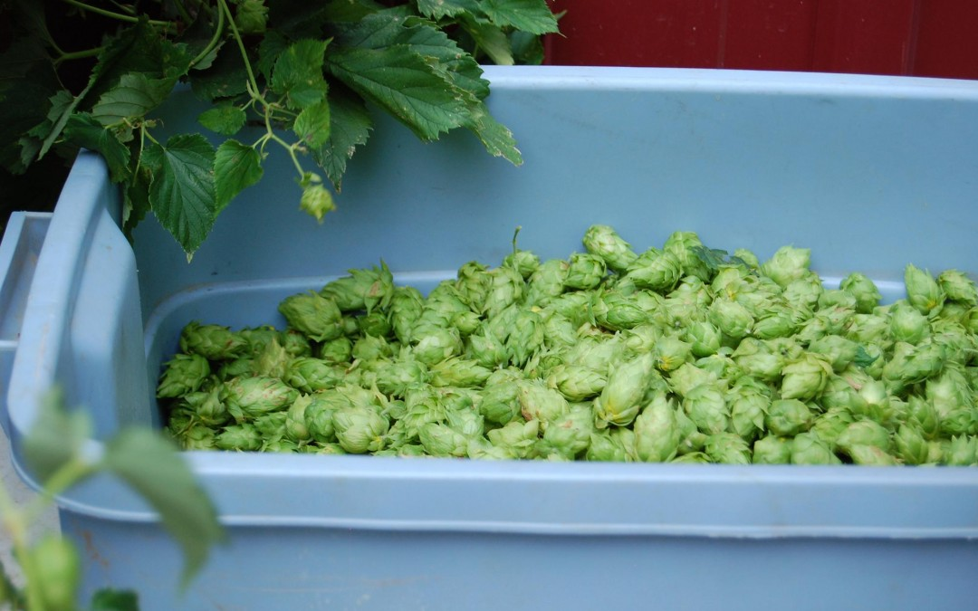 Fresh Hopped David vs Goliath