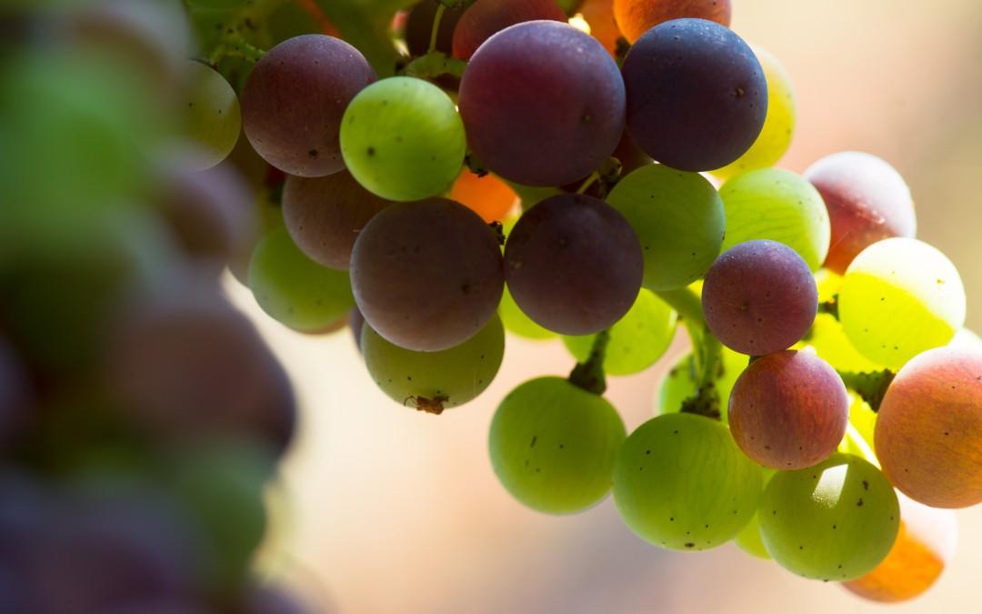 Beautiful Wines for Beautiful Weather