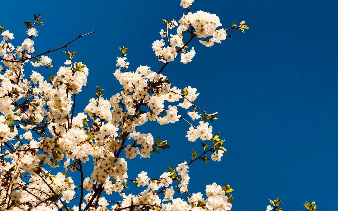 Spring Tastebud Break